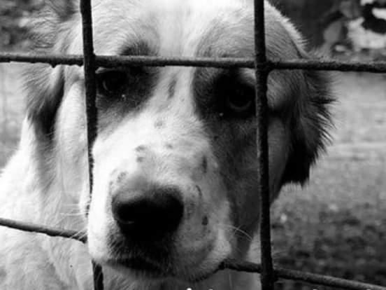 Maltrato animal en Antioquia: hallan perrita colgada de un árbol